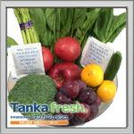 野菜の鮮度を保つ 竹炭と三番茶からできた『タンカフレッシュ』